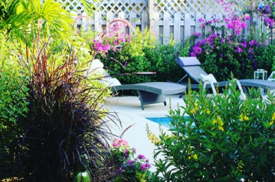 flowers and green plants surrounding a pool area
